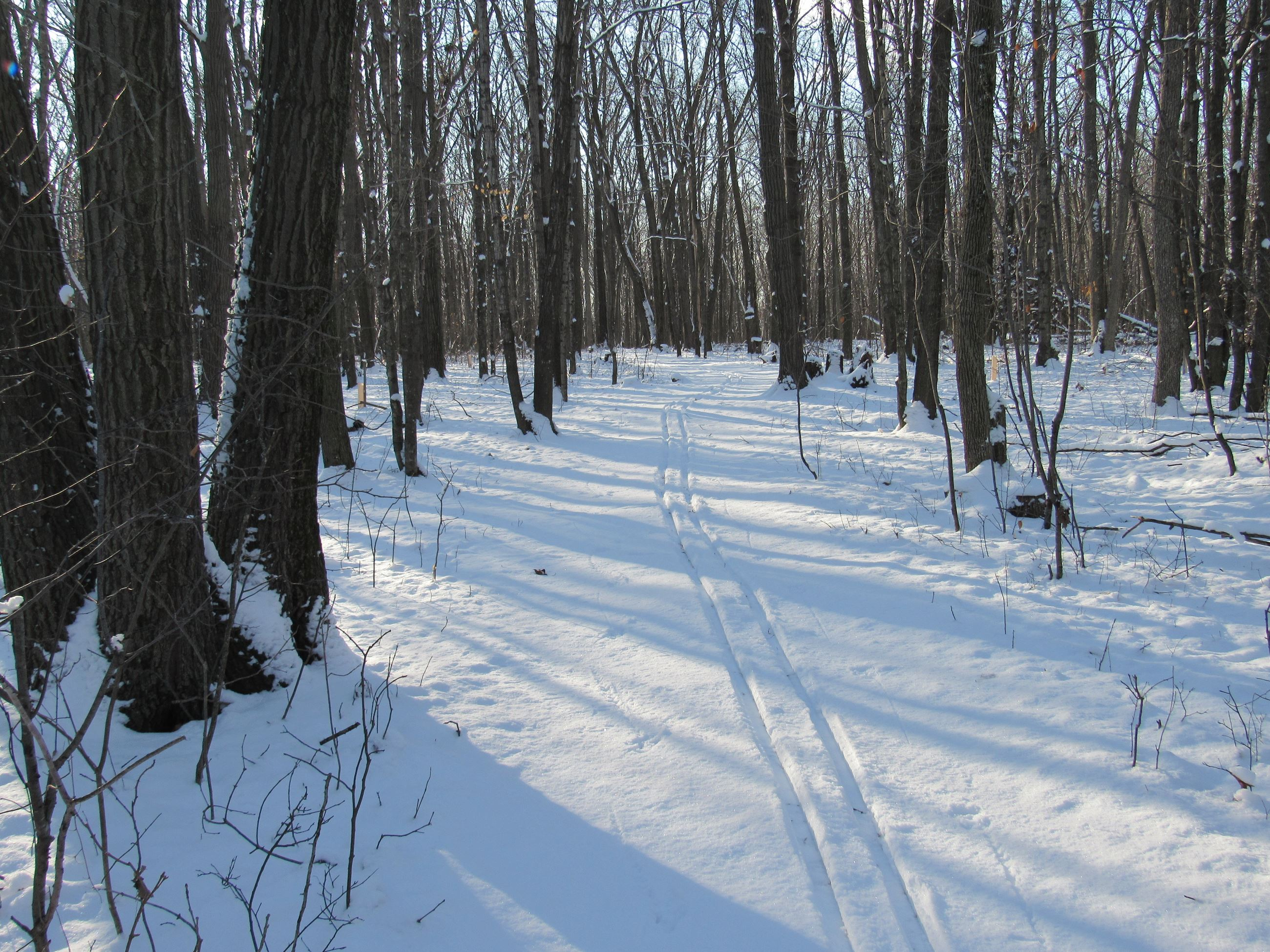 A groomed cross county ski trail in the woods